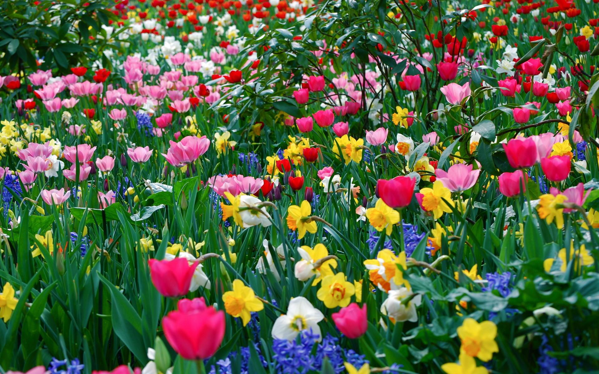 Цветы, разные, много, весна, весенние обои