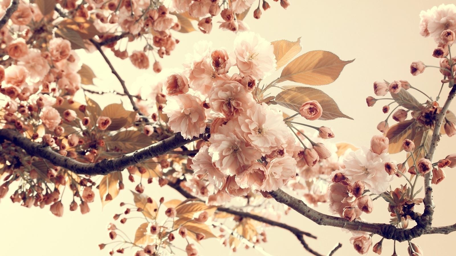 винтаж, листья, nature, цветы, Природа, ветки, vintage