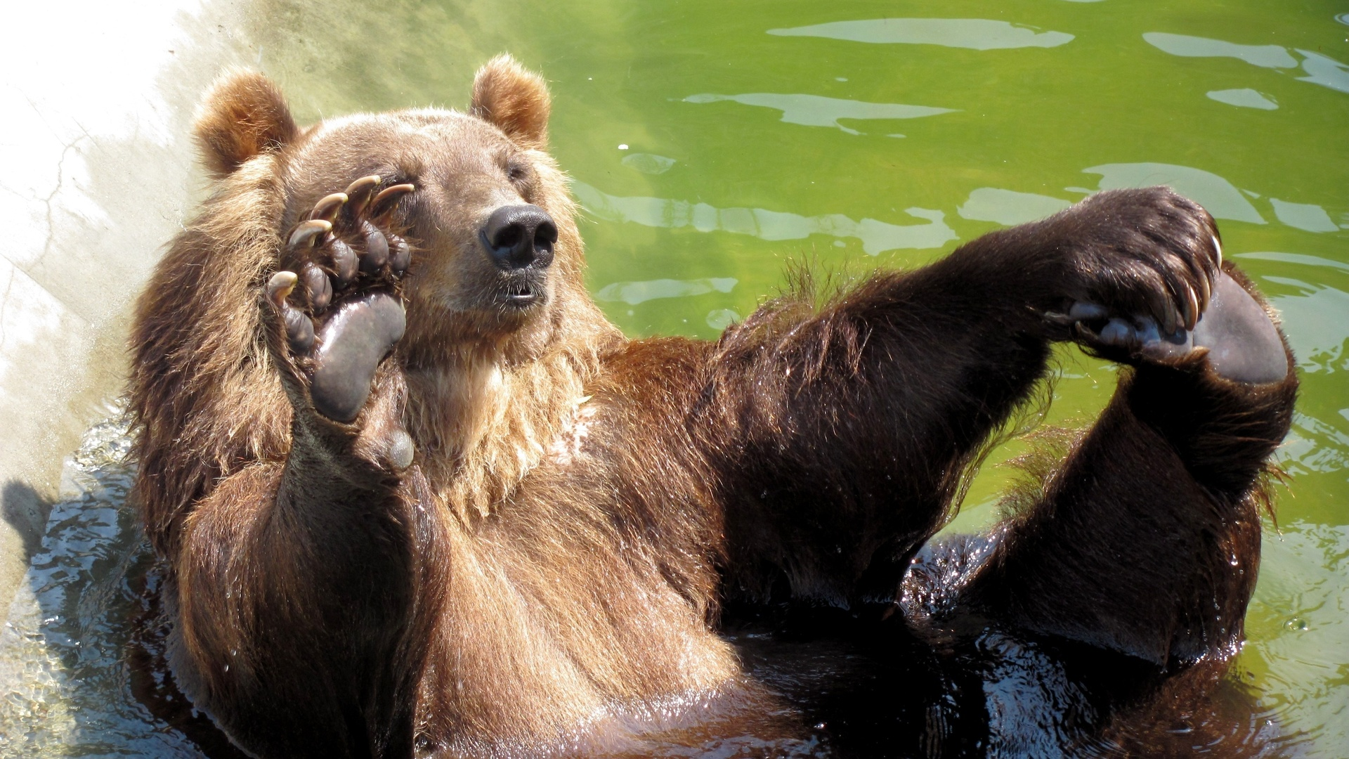 Подруге, картинки привет прикольные животные