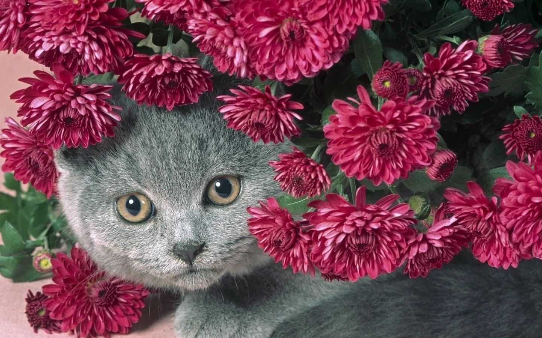 Поздравление, картинки красивые цветы прикольные
