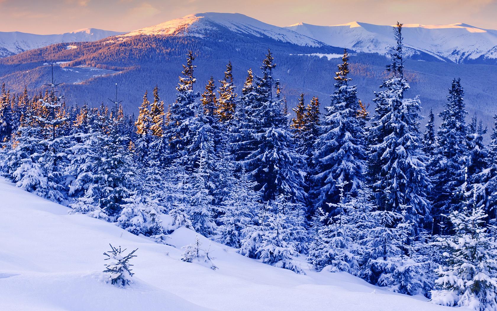 Картинки день, картинки зимы красивые