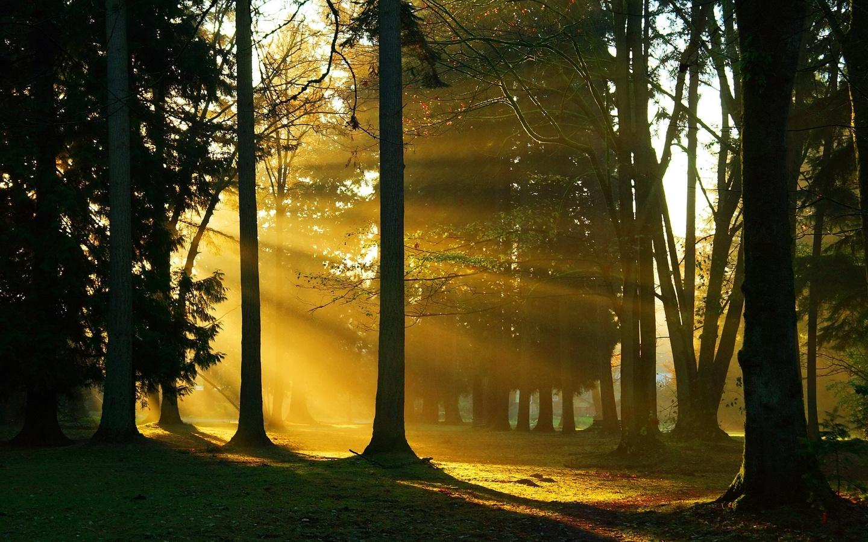 деревья, Лес, ветки, стволы, солнечный свет, природа