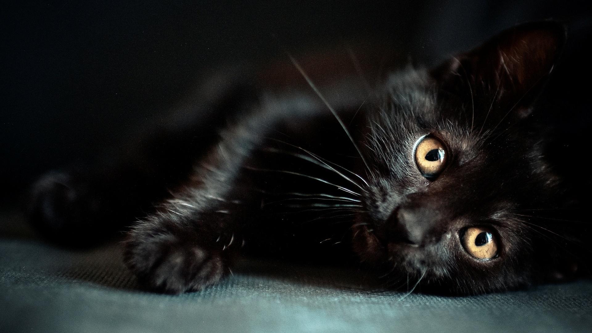 Фото черные картинки