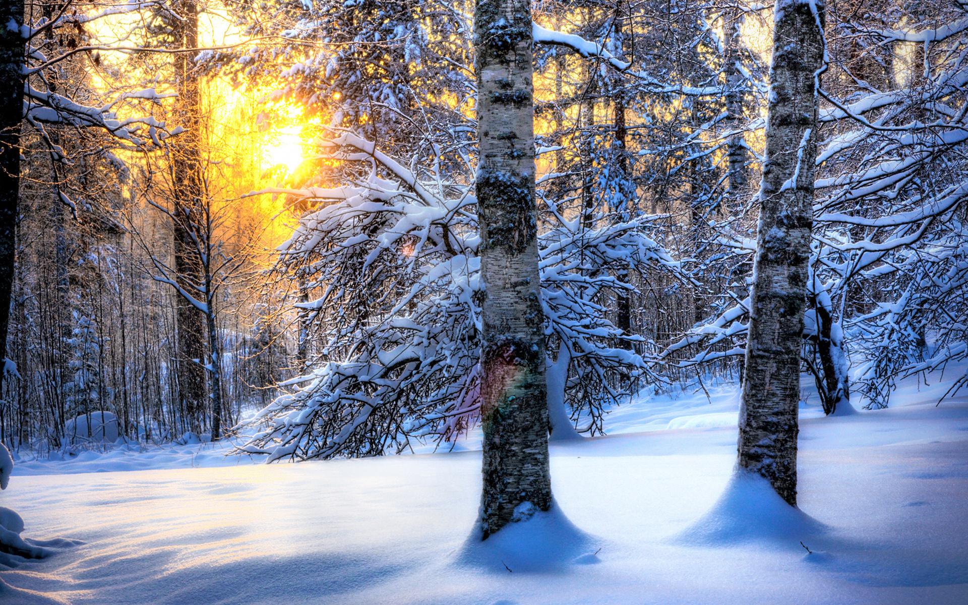 Картинки сказочный лес зимой, нов годом