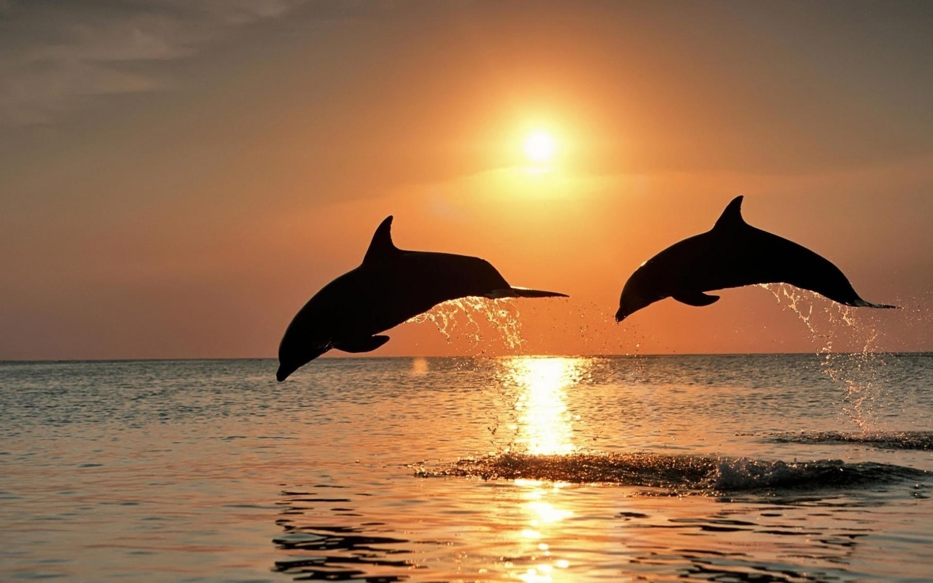 Открытки солнце море, сделать открытку