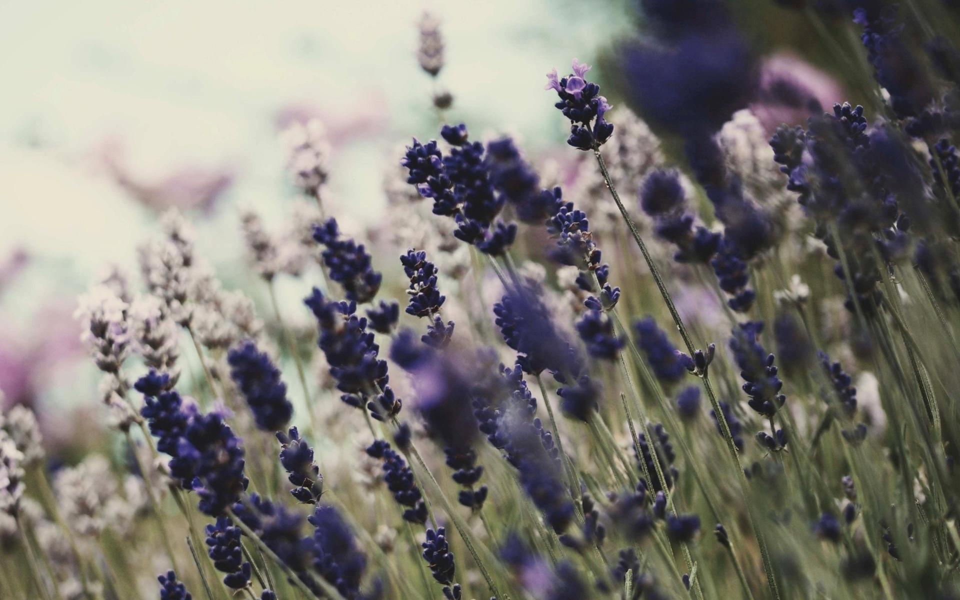 цветы, обои, цветение, фон, Природа, растения