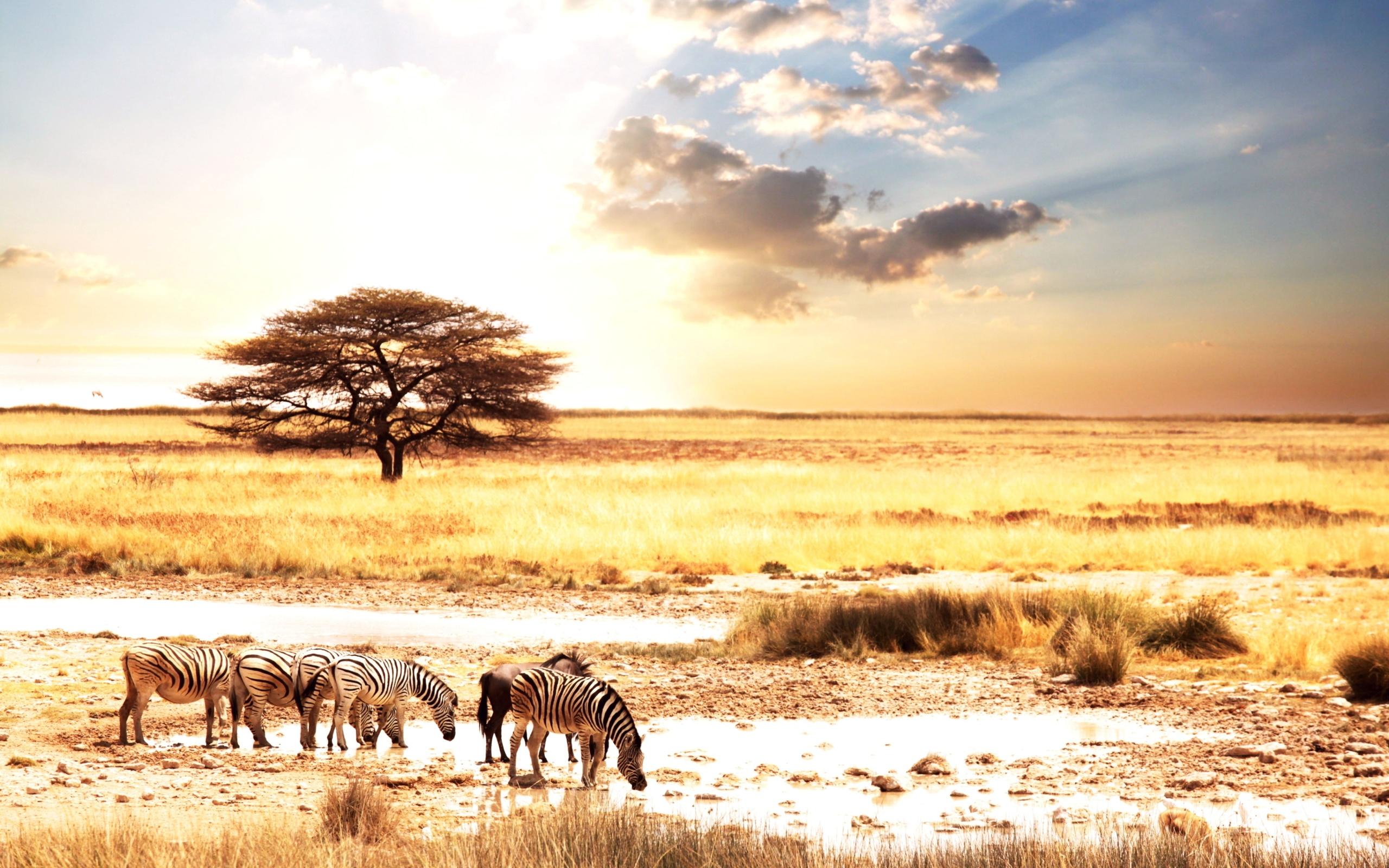 yutub-video-smotret-savanna