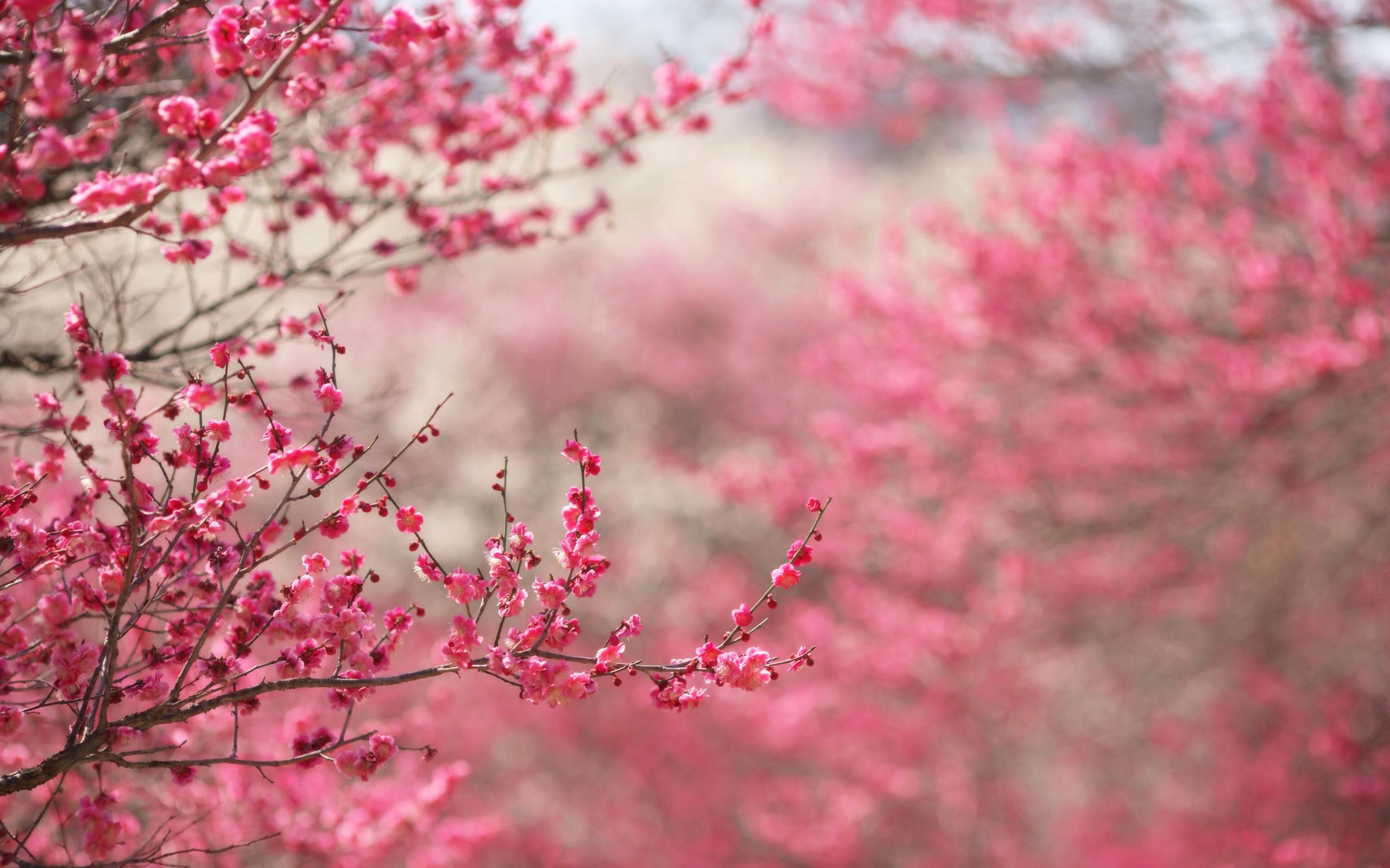 весна, цветы, красота, цвета радуги, картинки, обои