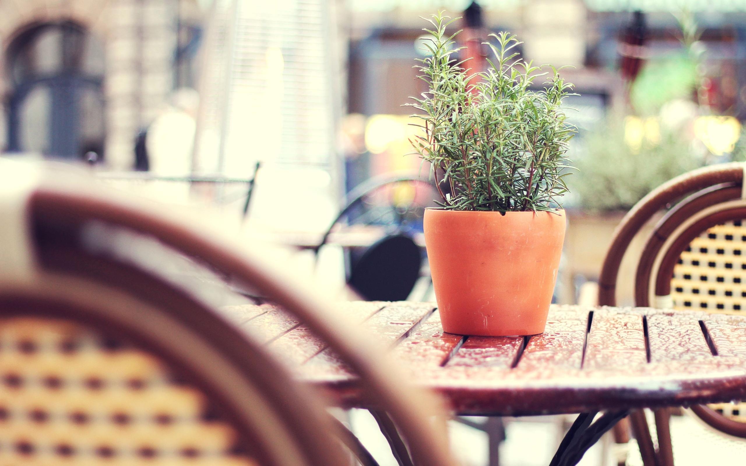 tilt-shift, city, Tea-garden, кафе, street, уличное, wicker chairs, after rain