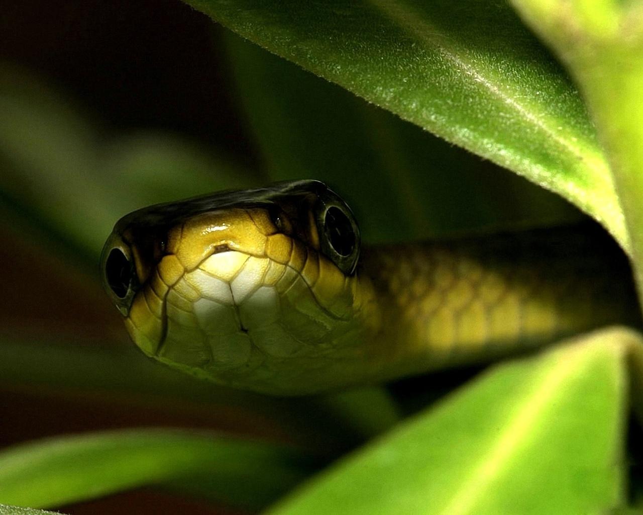 листья, змея, глаза, Фон, макро
