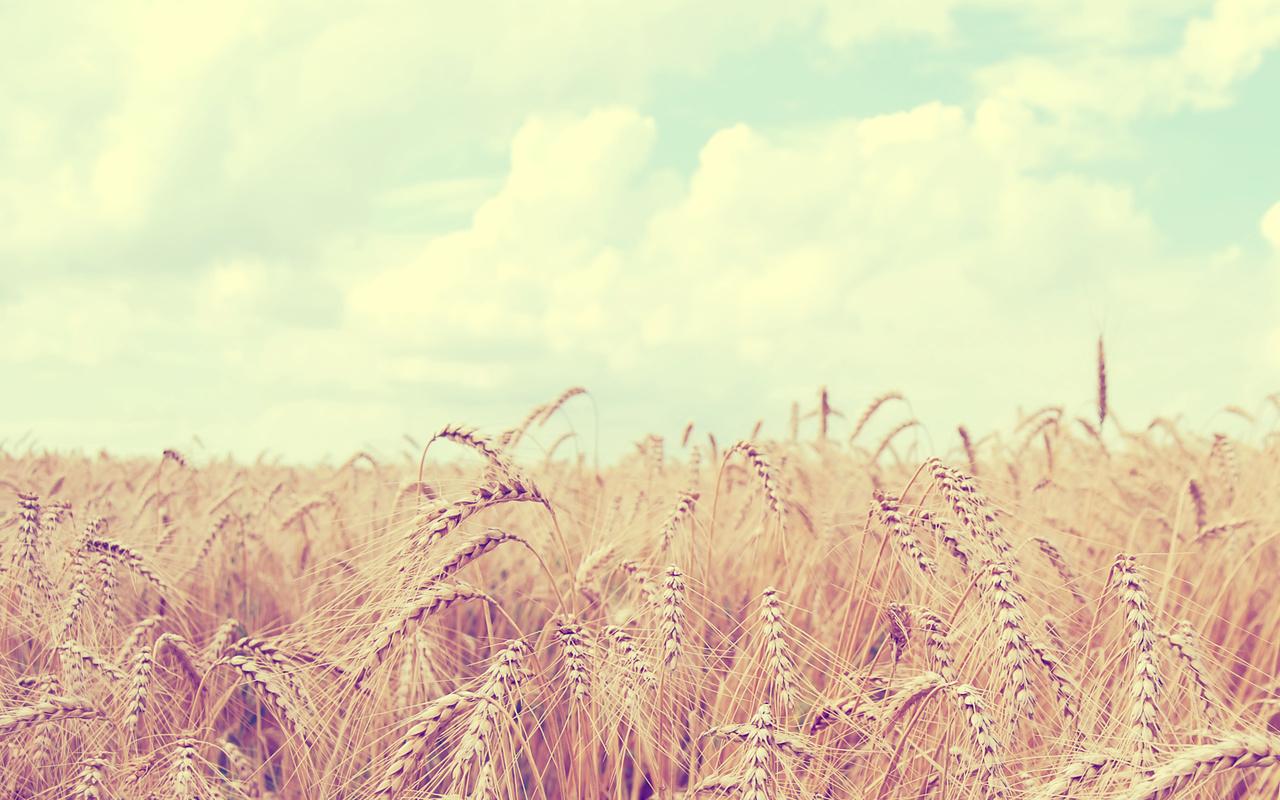Природа, облака, поле, колосья, небо, пейзаж, пшеница