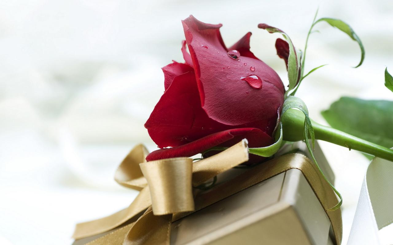 подарок, роза