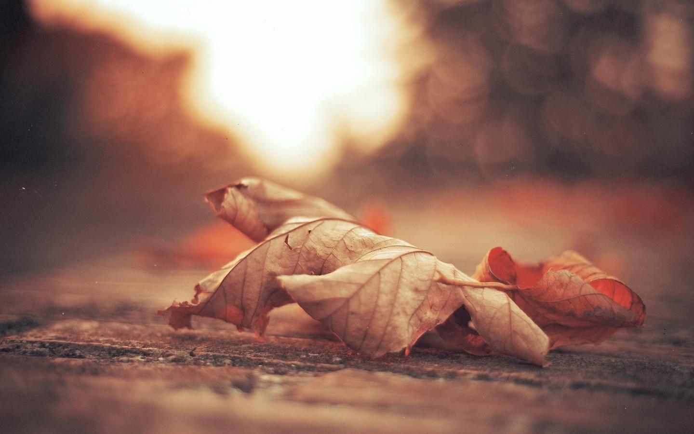 Картинки грустное настроение осень, днем физкультурника