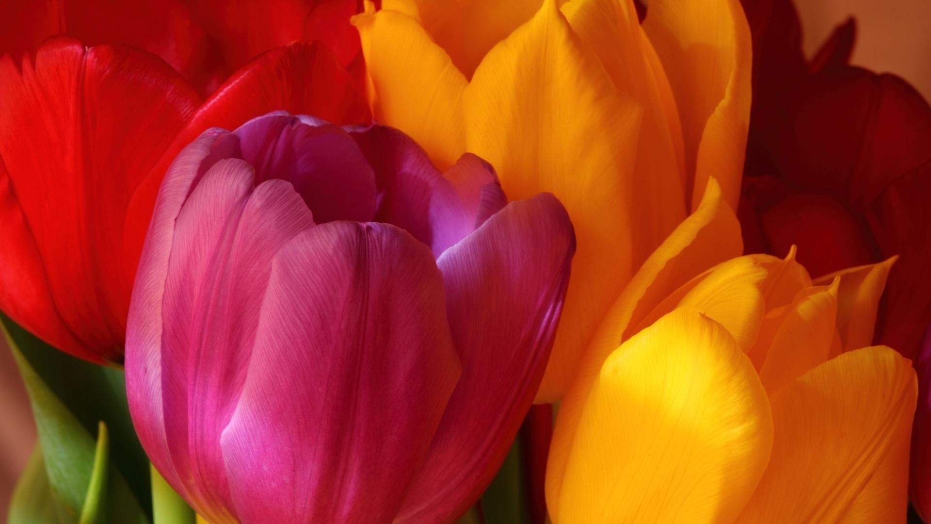 желтый, яркие, розовый, тюльпаны, букет, Цветы