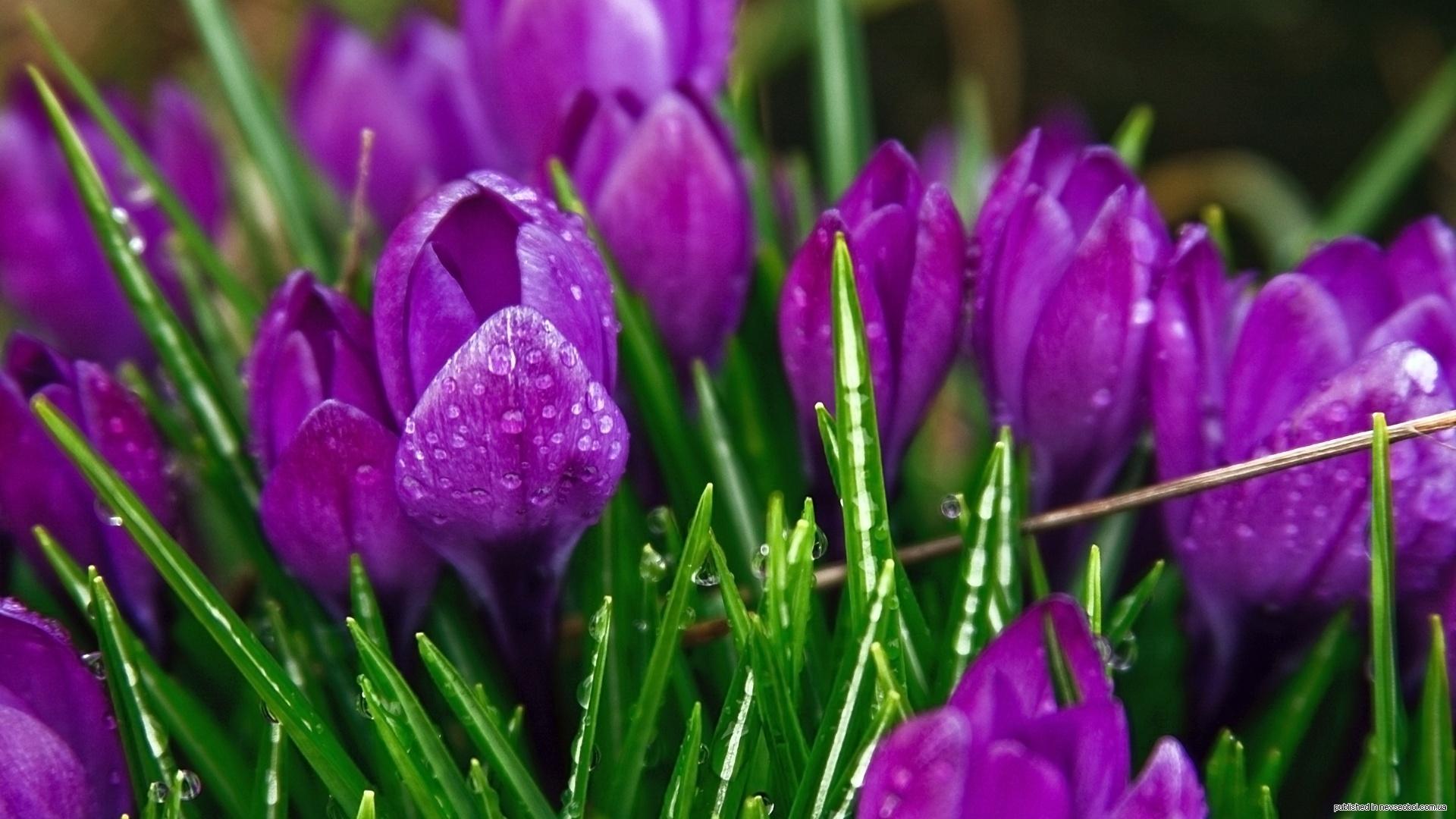 весна, ура