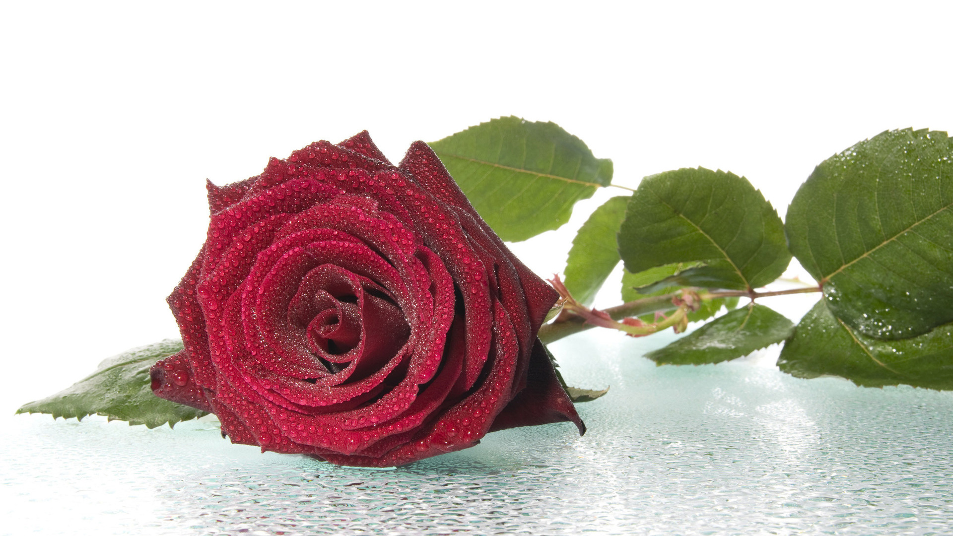 Открытки цветы розы одиночные