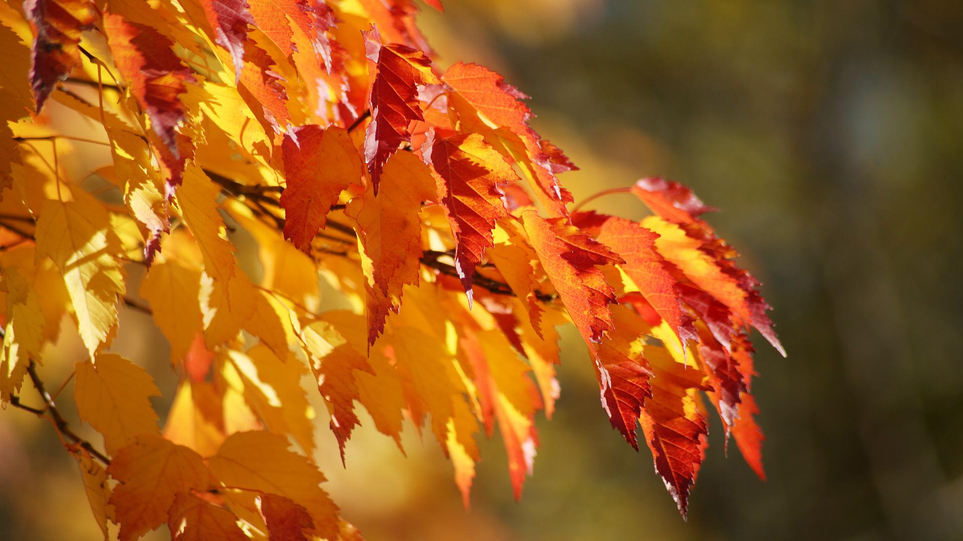 Лучшие картинки на рабочий стол широкоформатные осень наступила