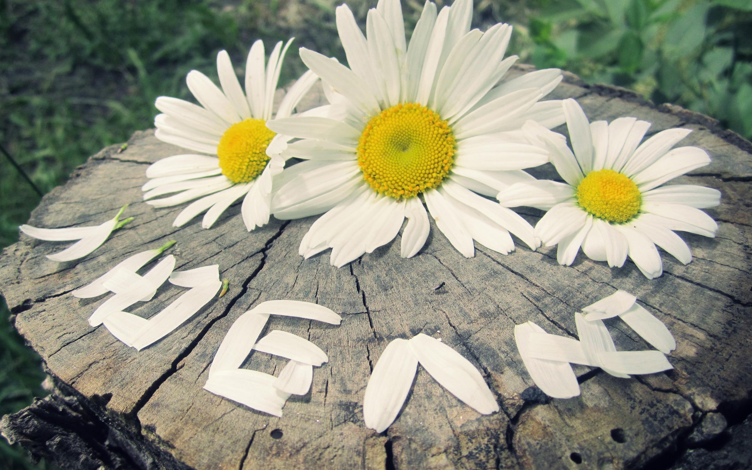 Картинки днем, картинки цветы с надписью люблю тебя