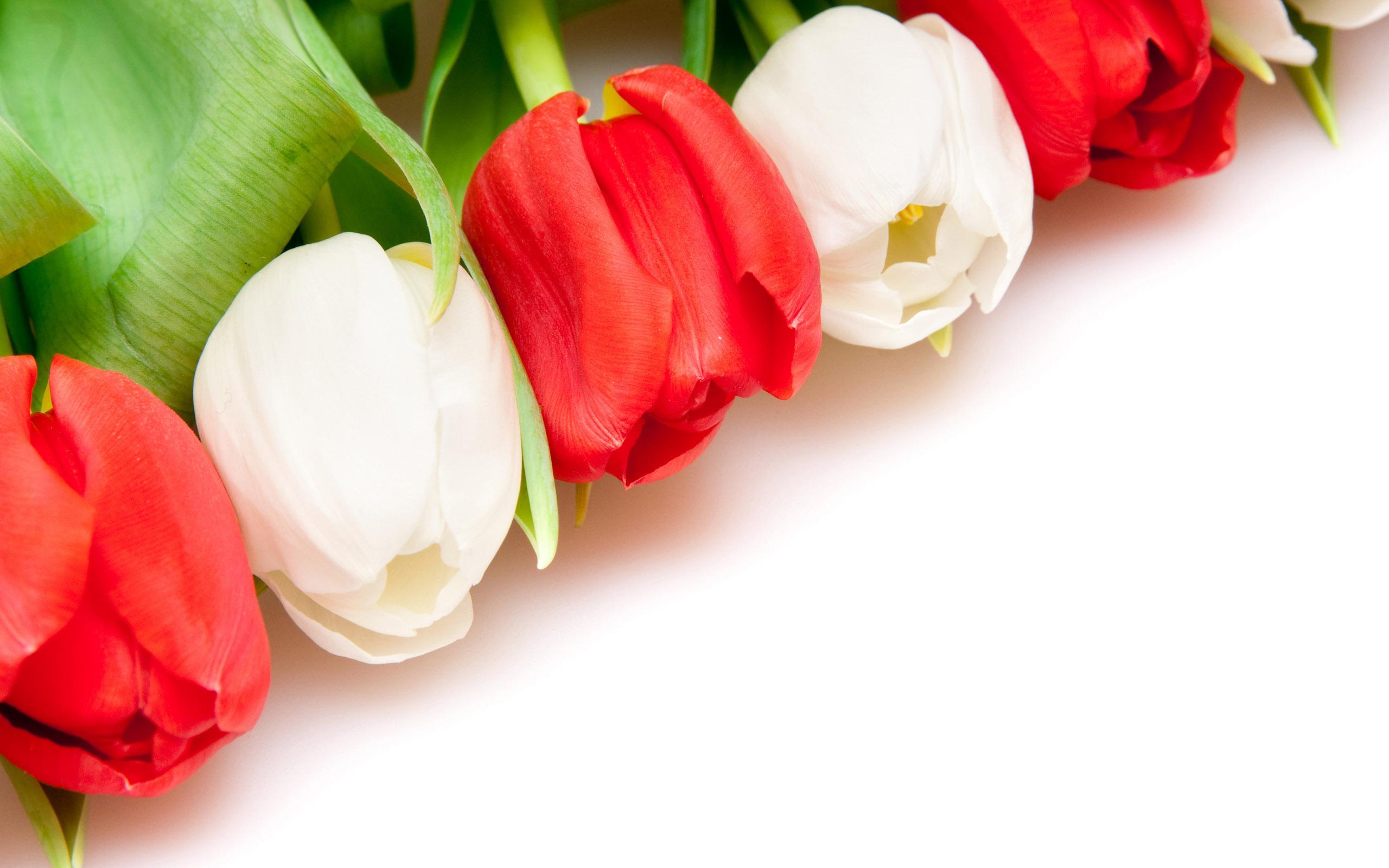 Открытки английском, фон для поздравления с тюльпанами