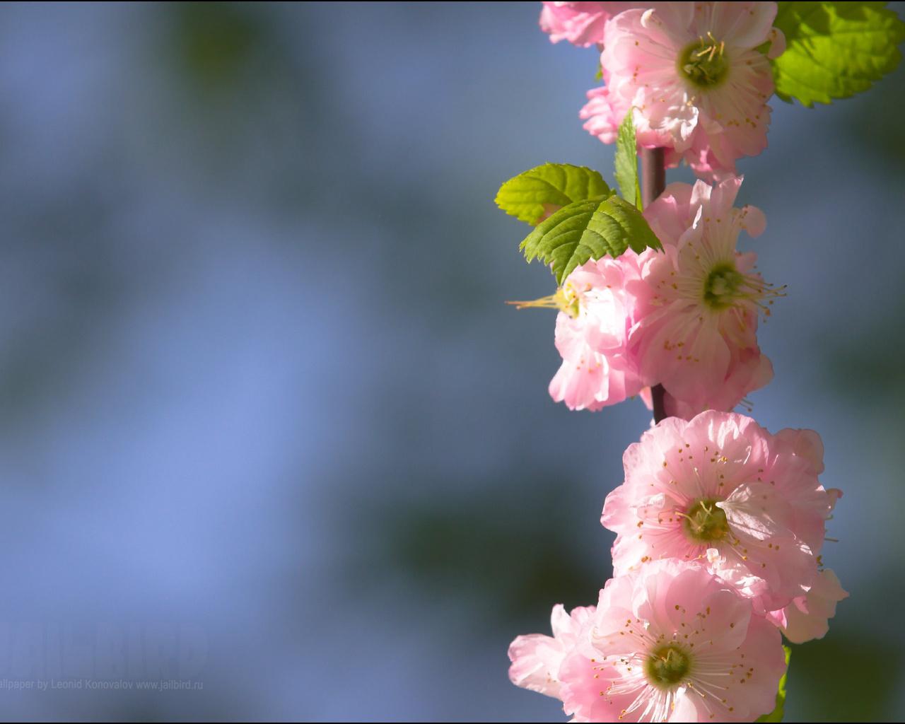 пейзаж, разное, Цветы