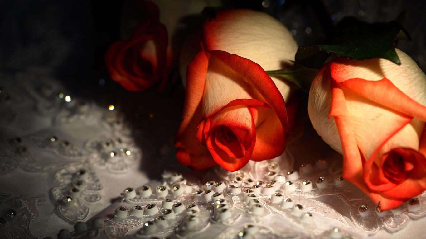 розы, 2