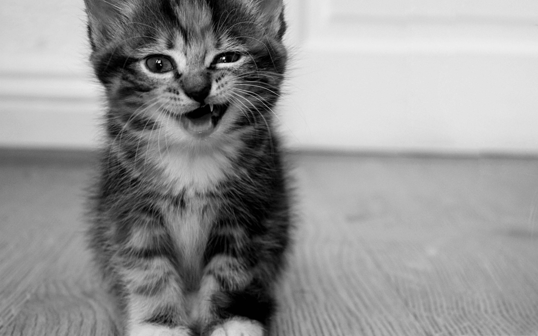 Все приколы с котятами на картинках
