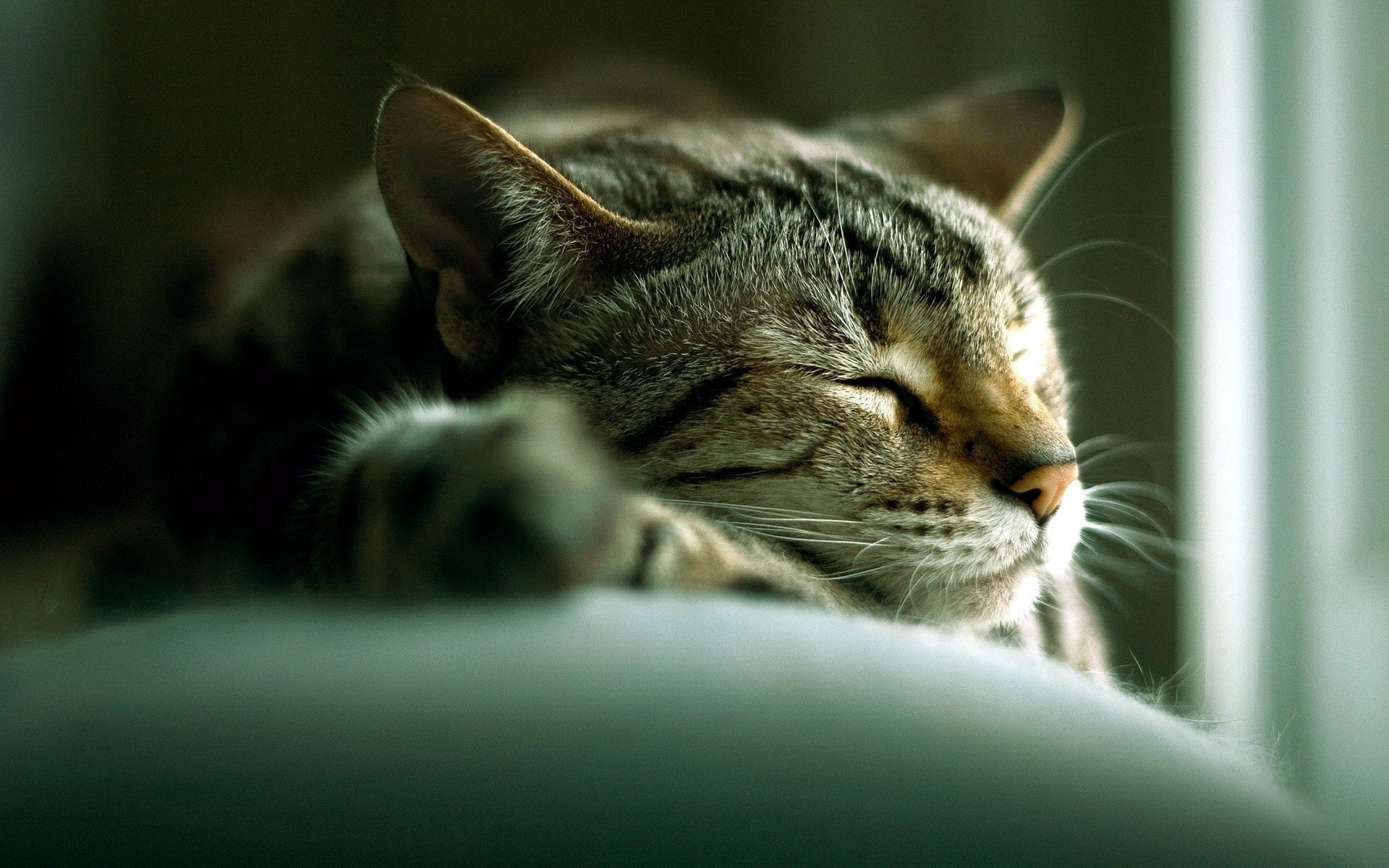 кошка, спит, сладко