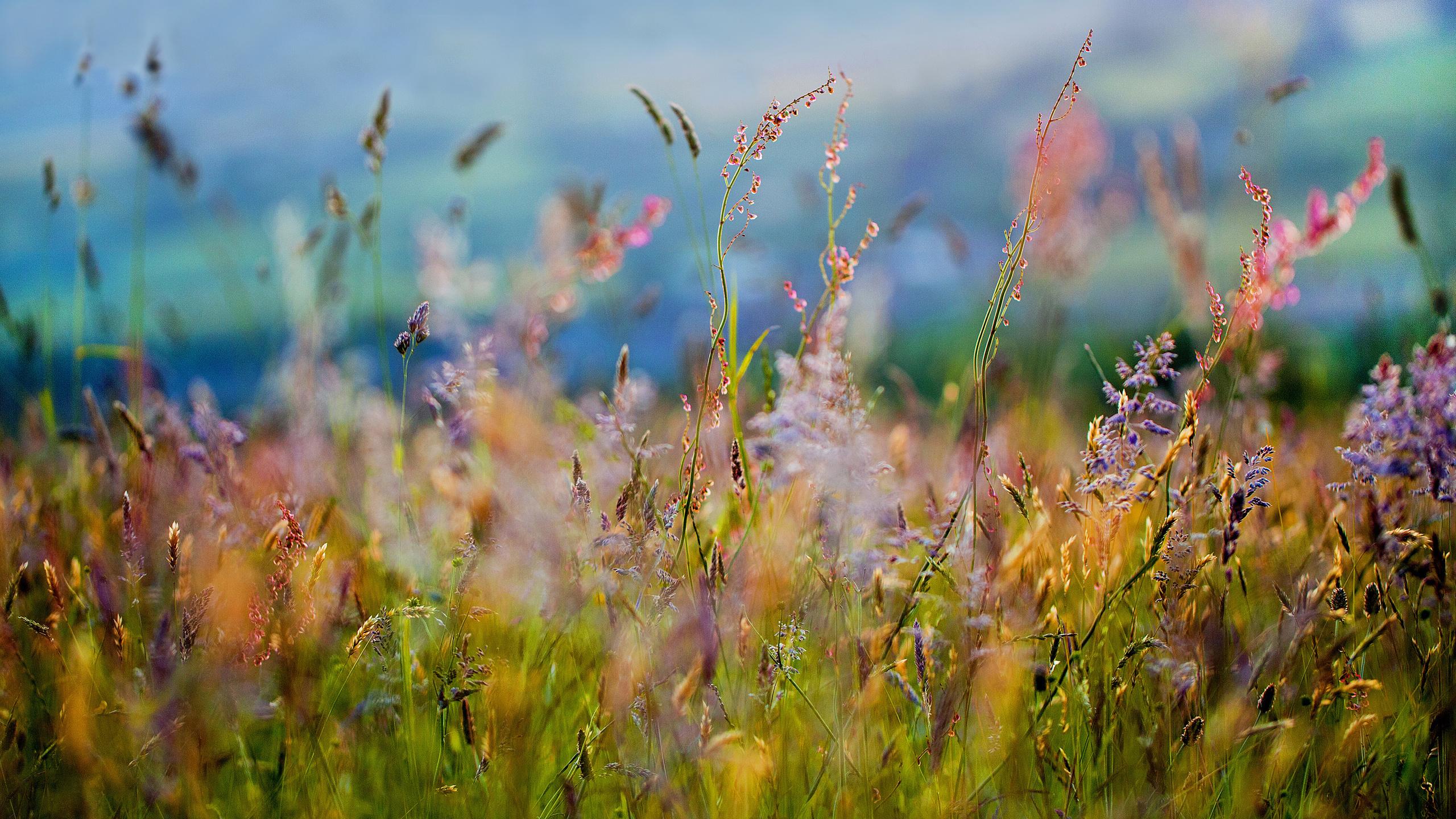 поле, цветы, Трава