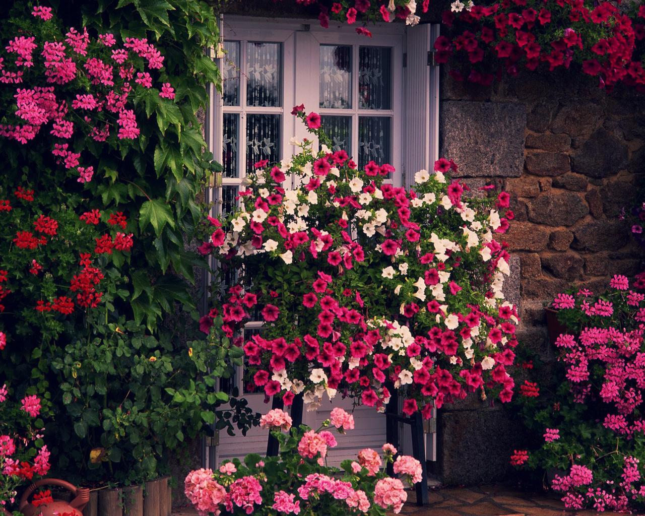 зелень, Цветы, дом, дверь, стена