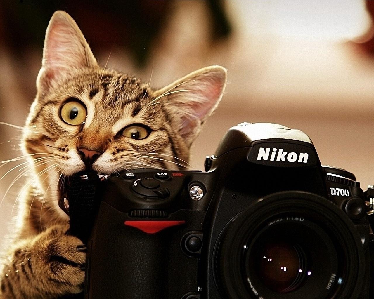 С днем фотографа смешная картинка