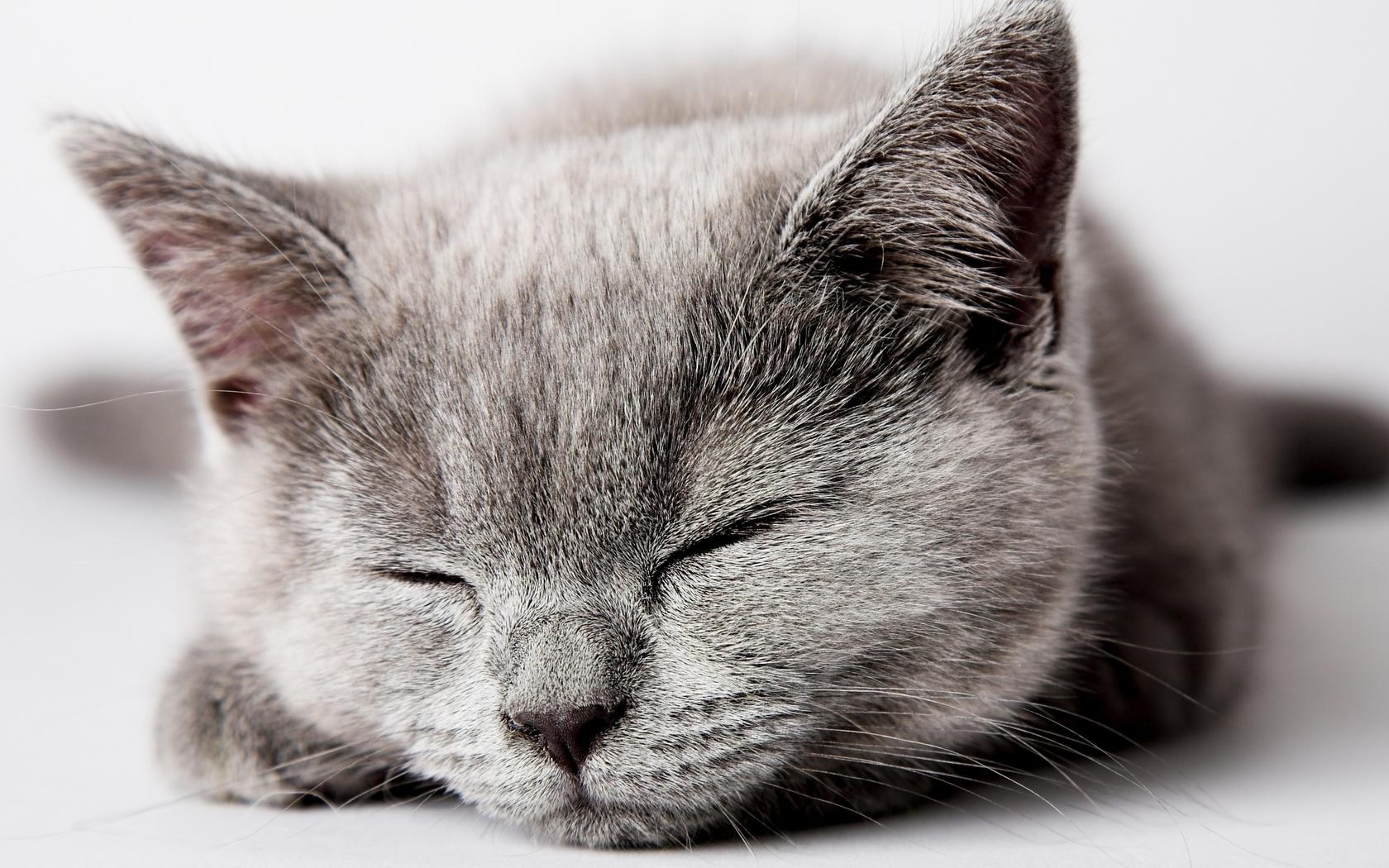 котэ, спит