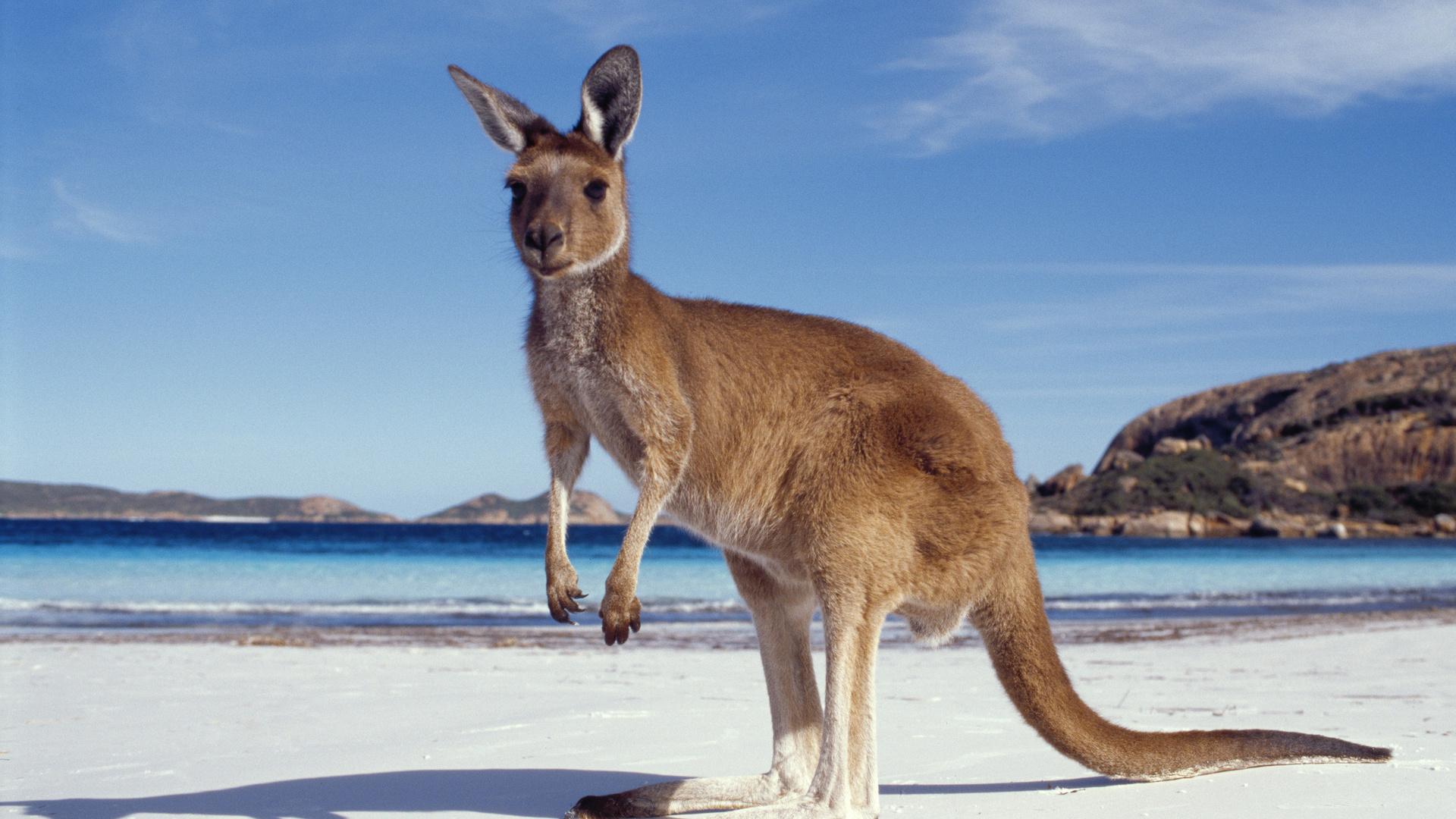 Австралия картинки для презентации, очки