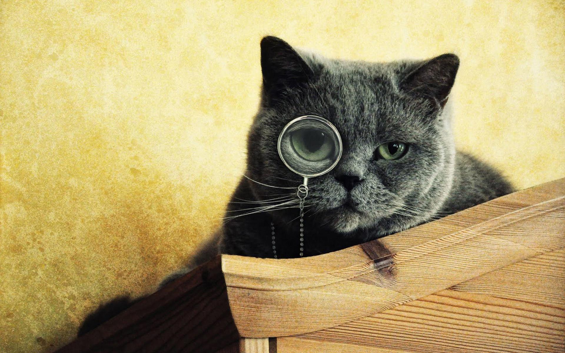 Днем, прикольные картинки на аву коты