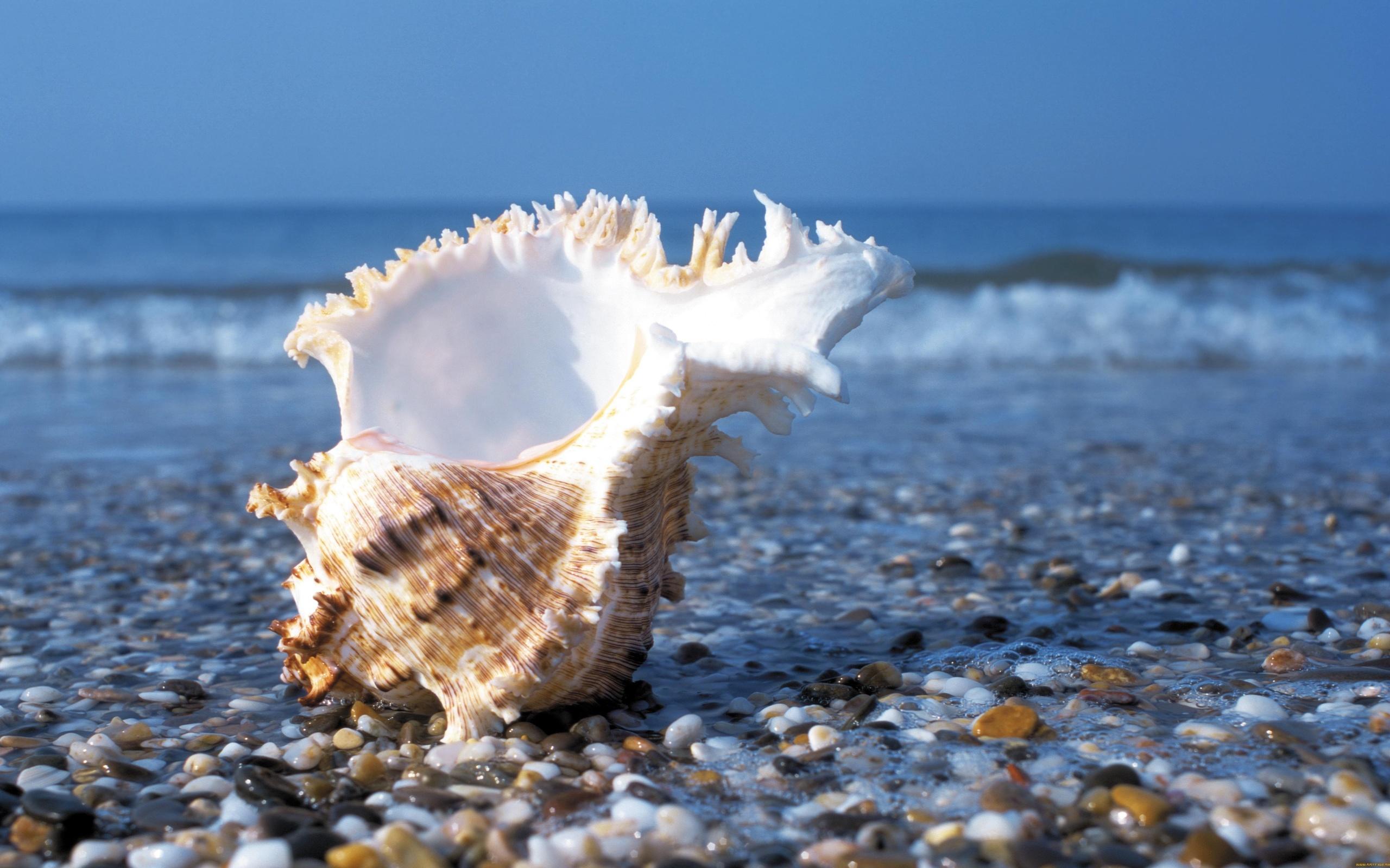 Красивая открытка с морем, открытки спокойной ночи