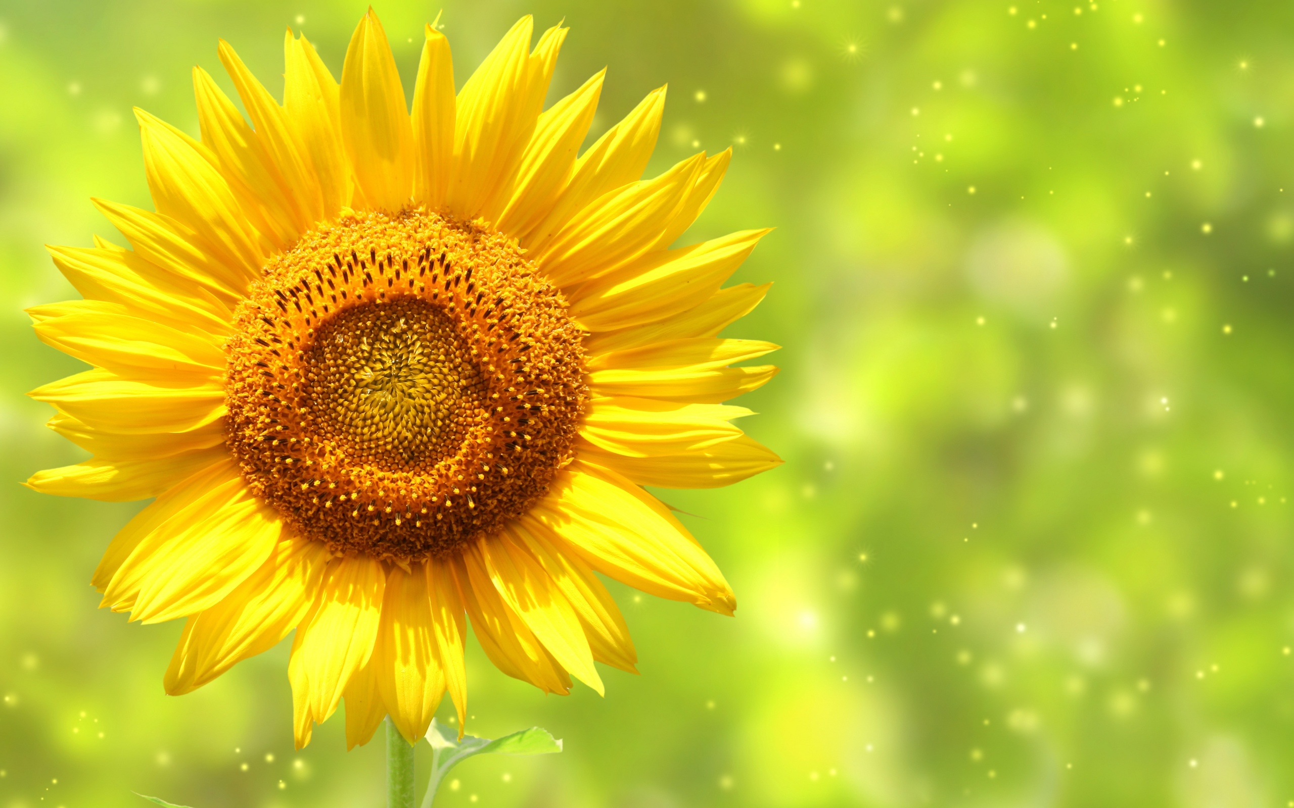 Виталик музыкальные, открытки фоны солнечные