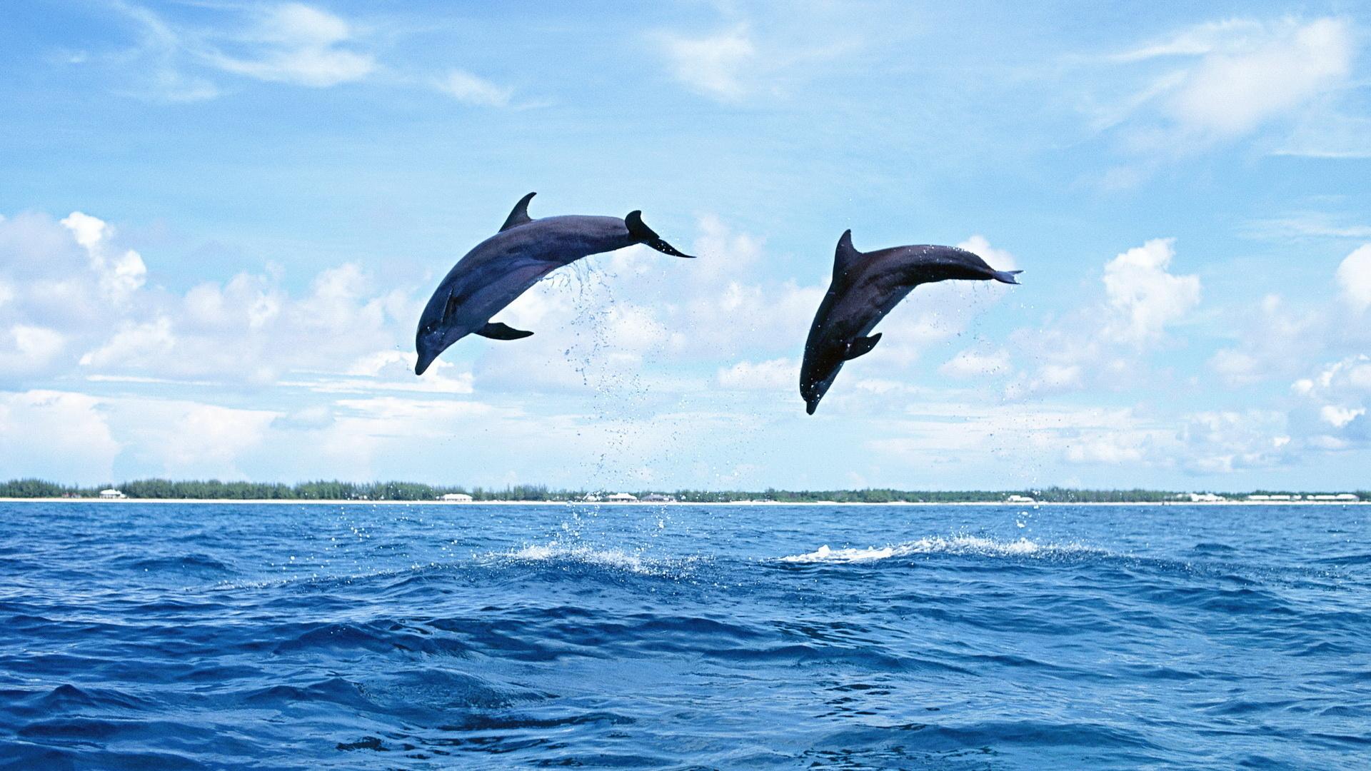 Веселые, картинки с дельфином в море
