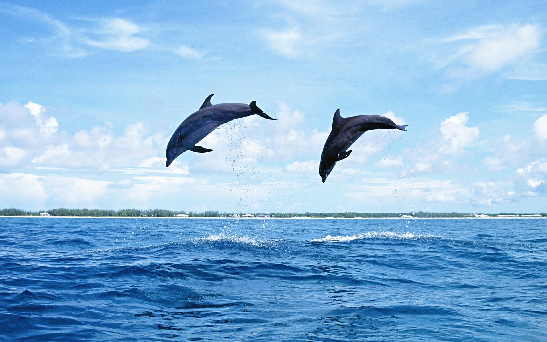 Красивые картинки с дельфинами на море, проснулся картинки