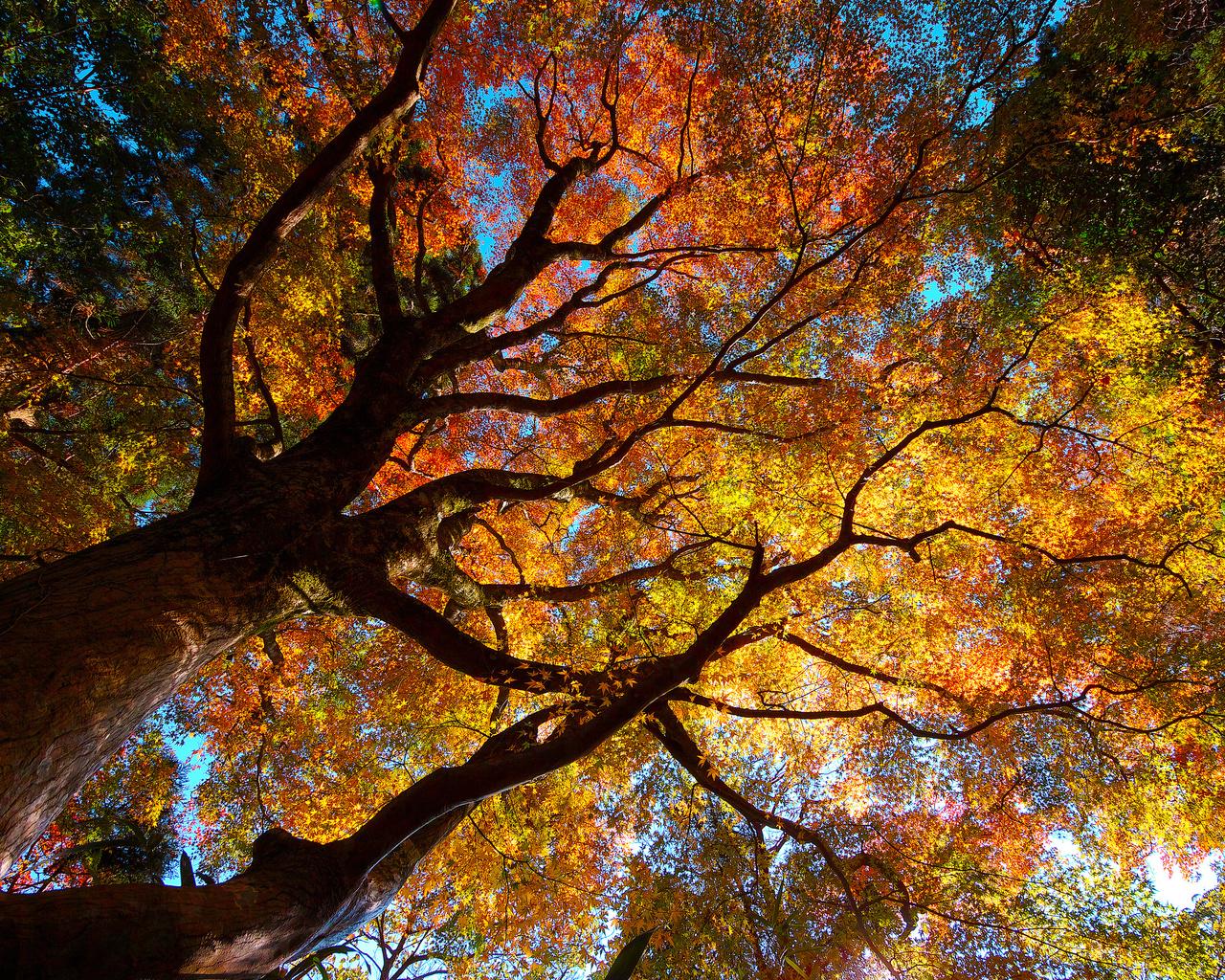 листва, Природа, кроны, деревья, осень, природа