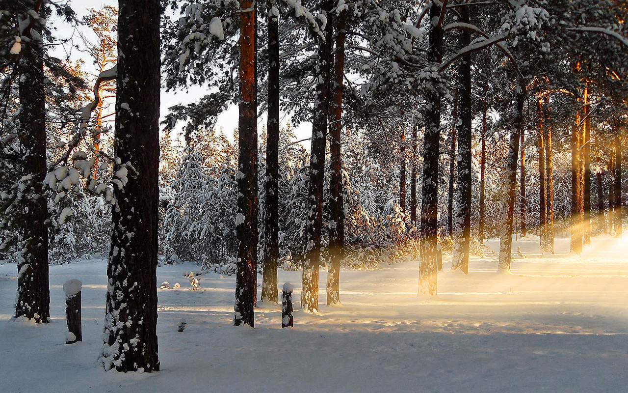лучи, снег, утро, лес, рассвет, природа, Зима