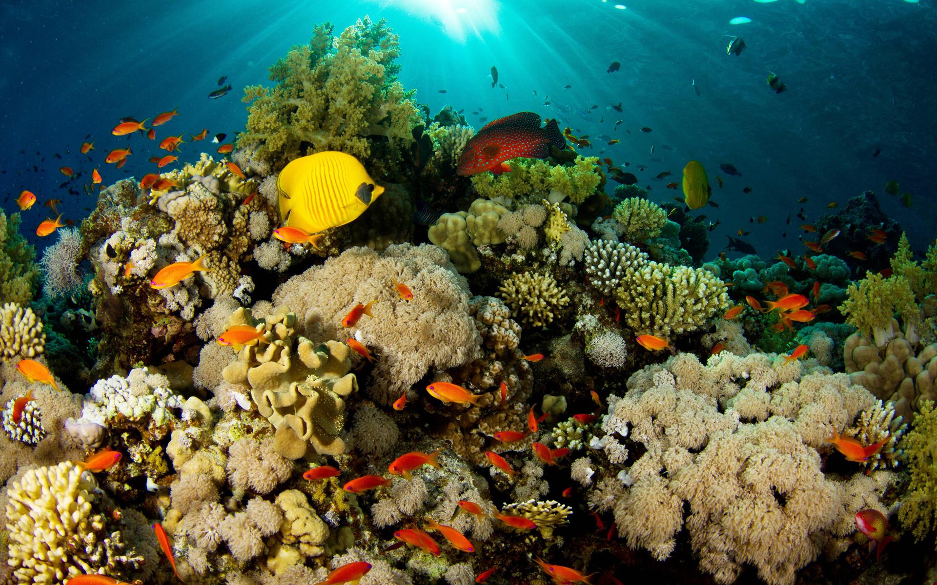Открытки котятами, картинка с кораллами