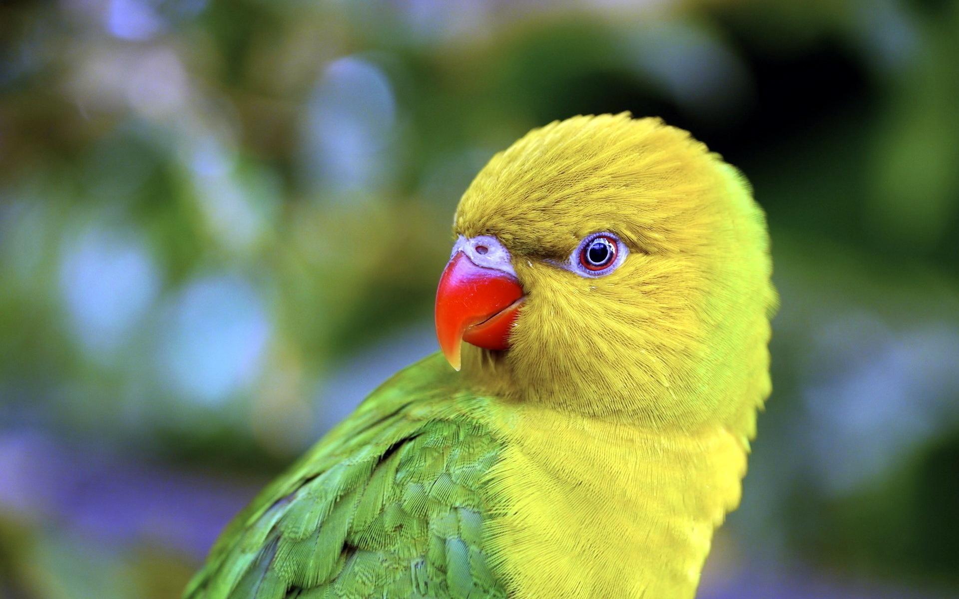 Картинка с попугайчиками