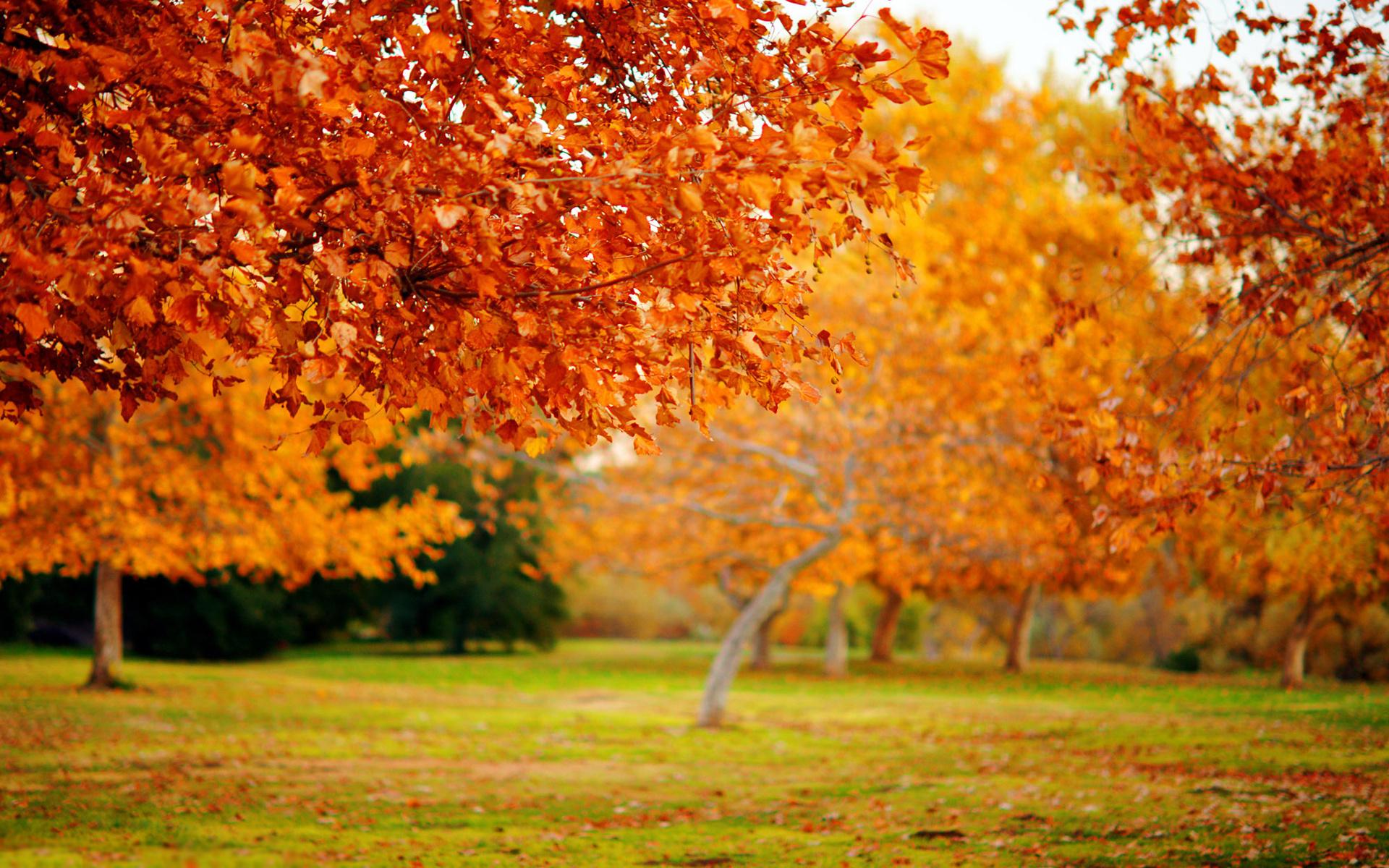Осень уют обои на рабочий стол