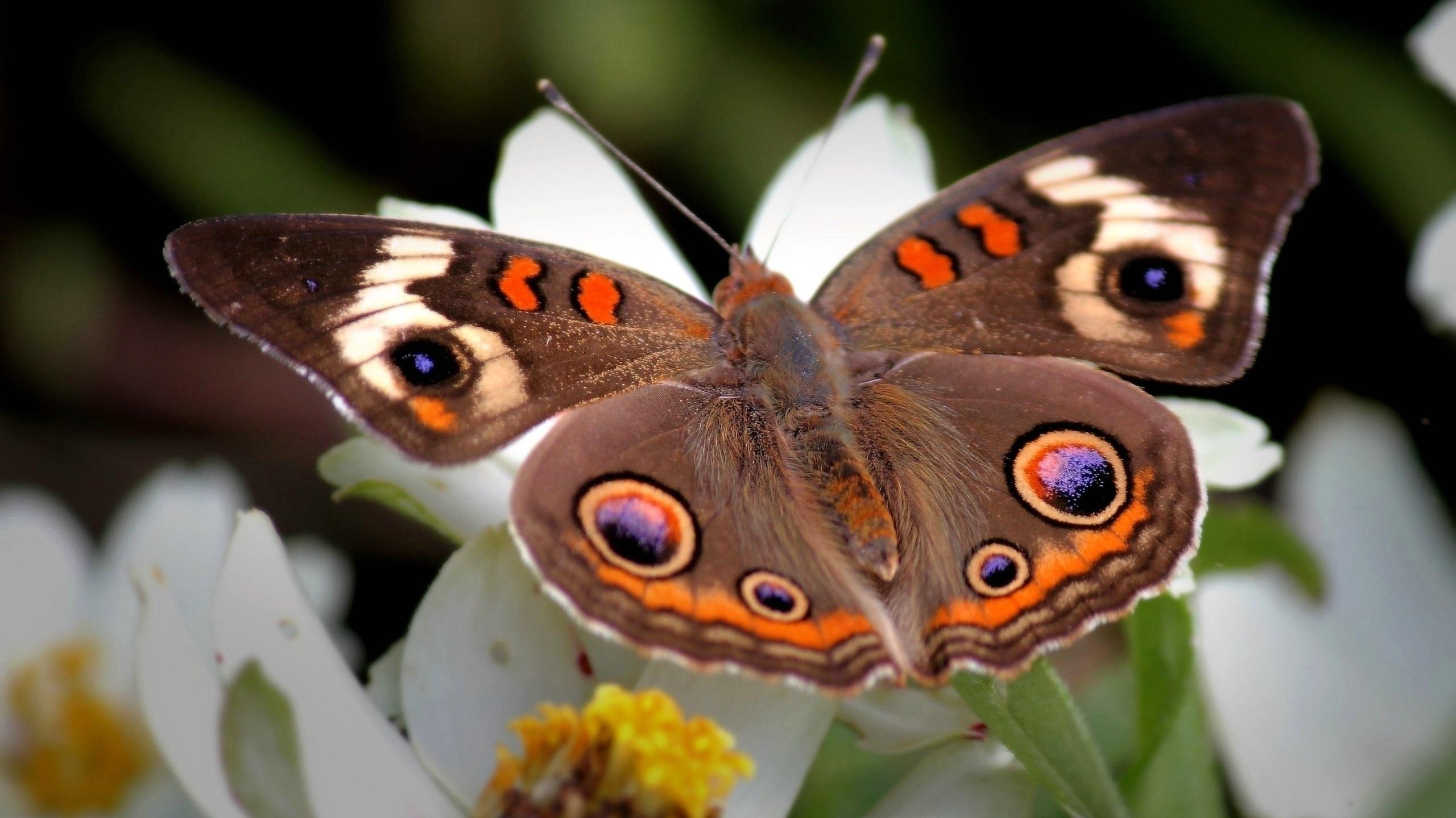 Картинка с бабочкой на цветке, богатыря