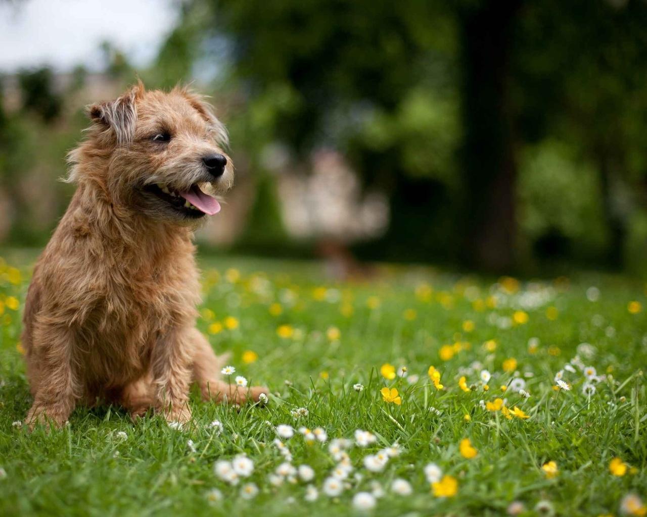 друг, Собака, лето