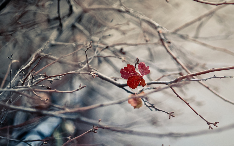 лист, Ветки, осень