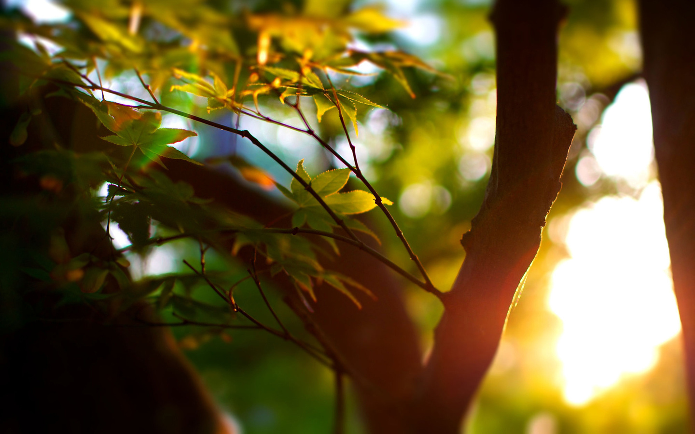 фокус, боке, макро, Лето, деревья, листья, дерево