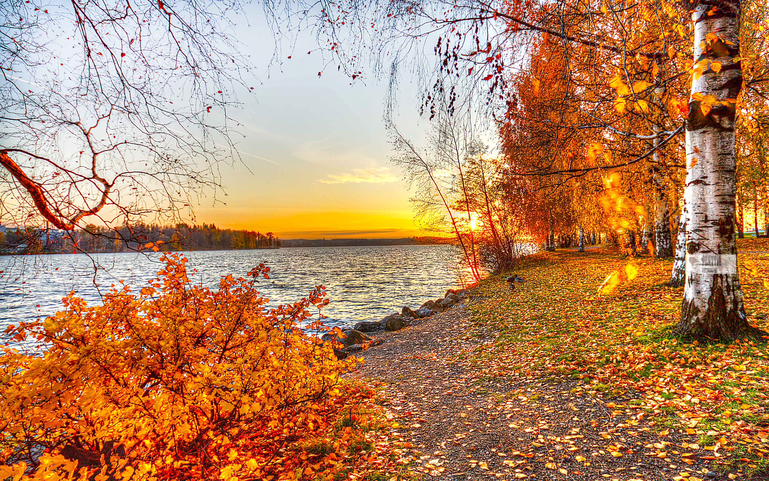 Днем учителя, красивые открытки с осенними пейзажами