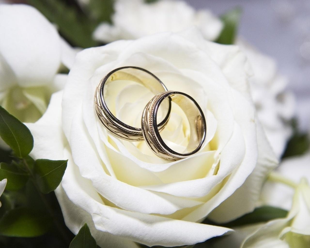 Открытки кольцо, днем