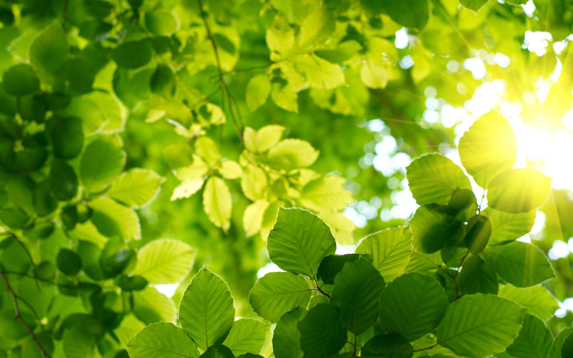 весна, солнце, Лес, листья, лето, зелень, небо
