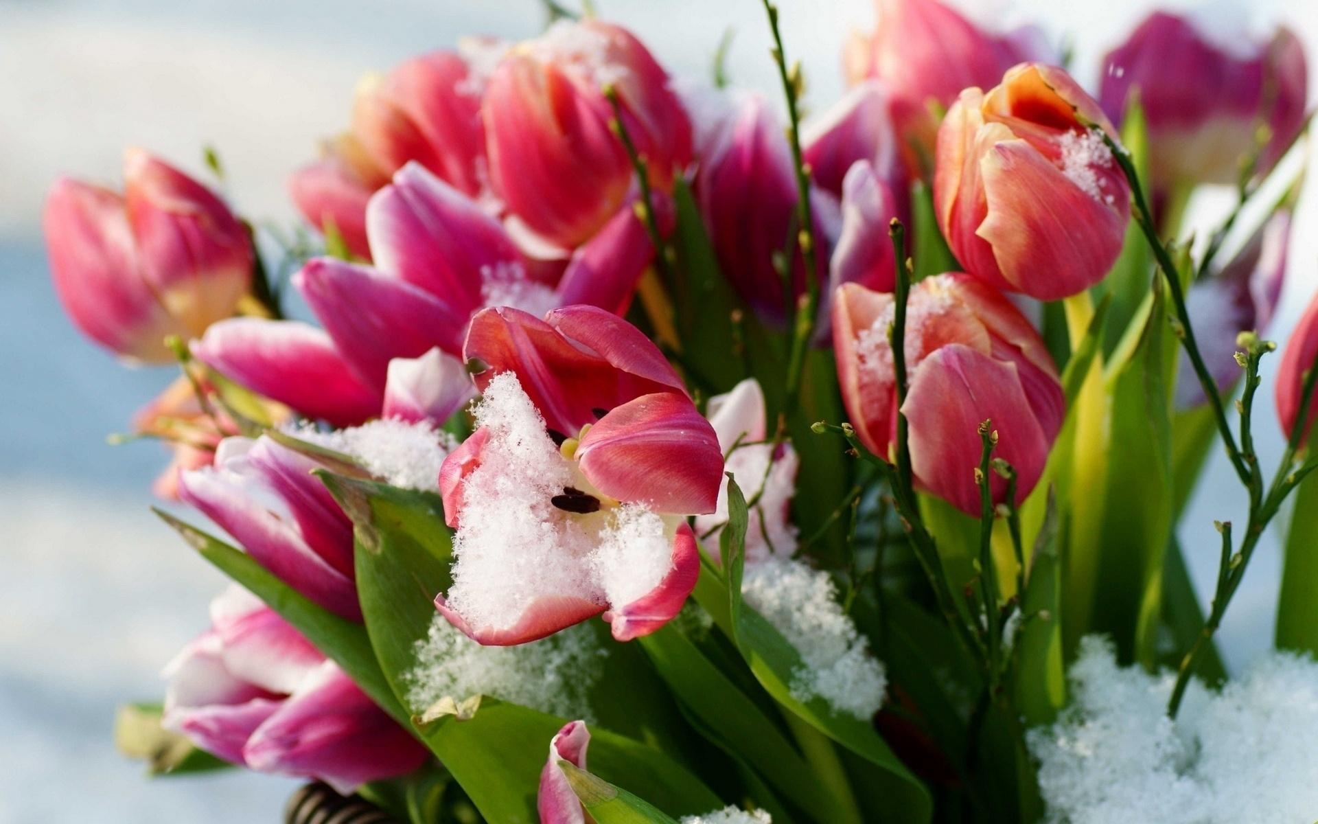 Днем рождения, открытка с первыми цветами